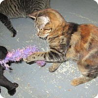 Adopt A Pet :: Ruffian - Norwich, NY