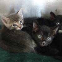 Adopt A Pet :: ITZY - Graham, TX