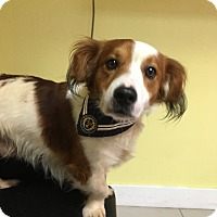 Adopt A Pet :: Arnie - Philadelphia, PA