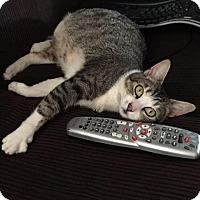 Adopt A Pet :: MAISY - Modesto, CA