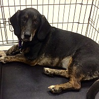 Adopt A Pet :: Jasmine in CT - East Hartford, CT