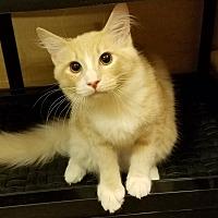 Adopt A Pet :: EMMETT - Diamond Bar, CA