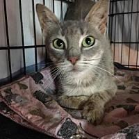 Adopt A Pet :: Auntie Em (Oz adult female) - Harrisburg, PA