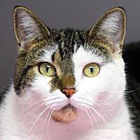 Adopt A Pet :: Ziti - Norwalk, CT