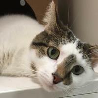 Adopt A Pet :: Xena - Parma, OH