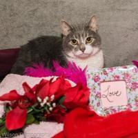 Adopt A Pet :: Zion - Neenah, WI