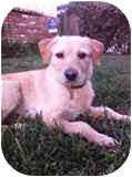 Terrier (Unknown Type, Small) Mix Dog for adoption in Encino, California - Greta