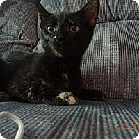 Adopt A Pet :: McKenzie - Saint Albans, WV