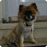 Adopt A Pet :: Fonzie - Mt Gretna, PA