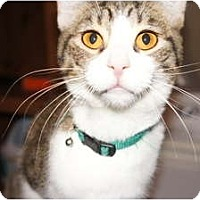Adopt A Pet :: George&Jerry - Xenia, OH