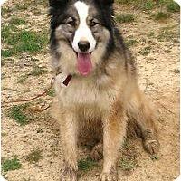 Adopt A Pet :: Jill (URGENT) - Staunton, VA