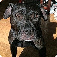 Adopt A Pet :: Katya - Charlotte, NC