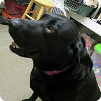 Adopt A Pet :: Arrow - Geneseo, IL