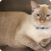Adopt A Pet :: Olaf - Sacramento, CA