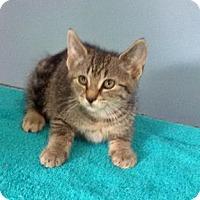 Adopt A Pet :: Pierce - McDonough, GA