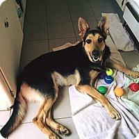 Adopt A Pet :: Adam - Burbank, CA