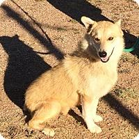 Adopt A Pet :: Cinnamon - Post, TX