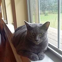 Adopt A Pet :: Taco - Chattanooga, TN