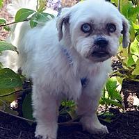 Adopt A Pet :: Rumba - Bridgeton, MO