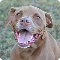 Adopt A Pet :: Cody - Englewood, FL
