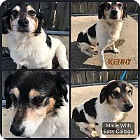 Adopt A Pet :: Kenny - Garden City, MI