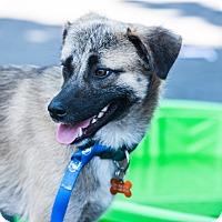 Adopt A Pet :: Sonny - Santa Rosa, CA
