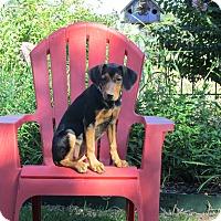 Adopt A Pet :: KATYDID - Bedminster, NJ