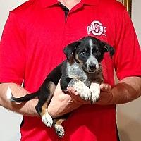 Adopt A Pet :: Panther - South Euclid, OH