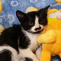 Adopt A Pet :: Gumdrop - Berlin, CT