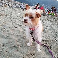 Adopt A Pet :: Podrick - San Francisco, CA