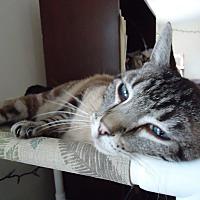 Adopt A Pet :: Romeo - Central Islip, NY