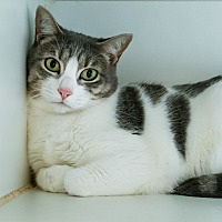 Adopt A Pet :: Lilith - Houston, TX