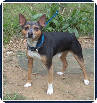 Manchester Terrier Mix Dog for adoption in Marietta, Georgia - HERO