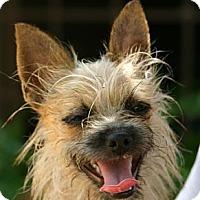 Adopt A Pet :: Brita - Cantonment, FL