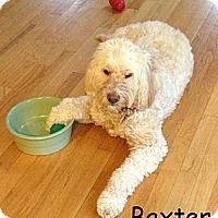Adopt A Pet :: Worcester MA - Baxter - W. Warwick, RI