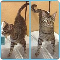 Adopt A Pet :: Cisco - Modesto, CA
