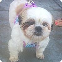 Adopt A Pet :: Princess - Encinitas, CA