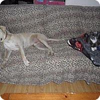 Adopt A Pet :: Casper,enjoys family life!!!! - Sacramento, CA