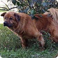 Adopt A Pet :: Rusty - Holland, MI