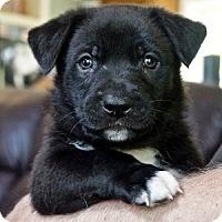 Adopt A Pet :: Axel*Adoption Pending* - Mill Creek, WA