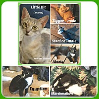 Adopt A Pet :: CATS /KITTENS- ALL KINDS/COLOR - Malvern, AR