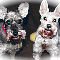 Adopt A Pet :: Layla & LuLu~~ADOPT PENDING - Sharonville, OH