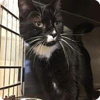 Adopt A Pet :: Riley - Bridgewater, NJ