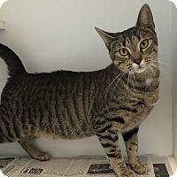 Adopt A Pet :: Melony - Newport, NC