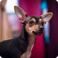 Adopt A Pet :: TWIGGY - Emeryville, CA