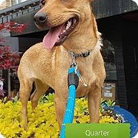 Adopt A Pet :: Quarter - Cincinnati, OH