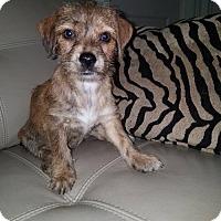 Adopt A Pet :: Wendy - Deerfield Beach, FL