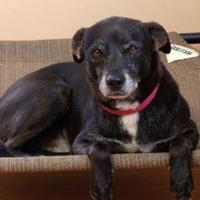 Terrier (Unknown Type, Small) Mix Dog for adoption in Cedar Bluff, Alabama - Freeman