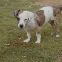 Adopt A Pet :: Rigsby - Las Cruces, NM