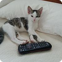 Adopt A Pet :: Murph - New Kensington, PA